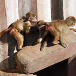 baboon-kids-playing