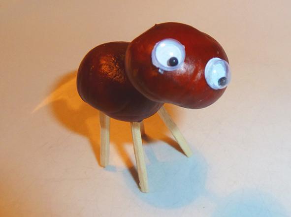 chestnut-animal