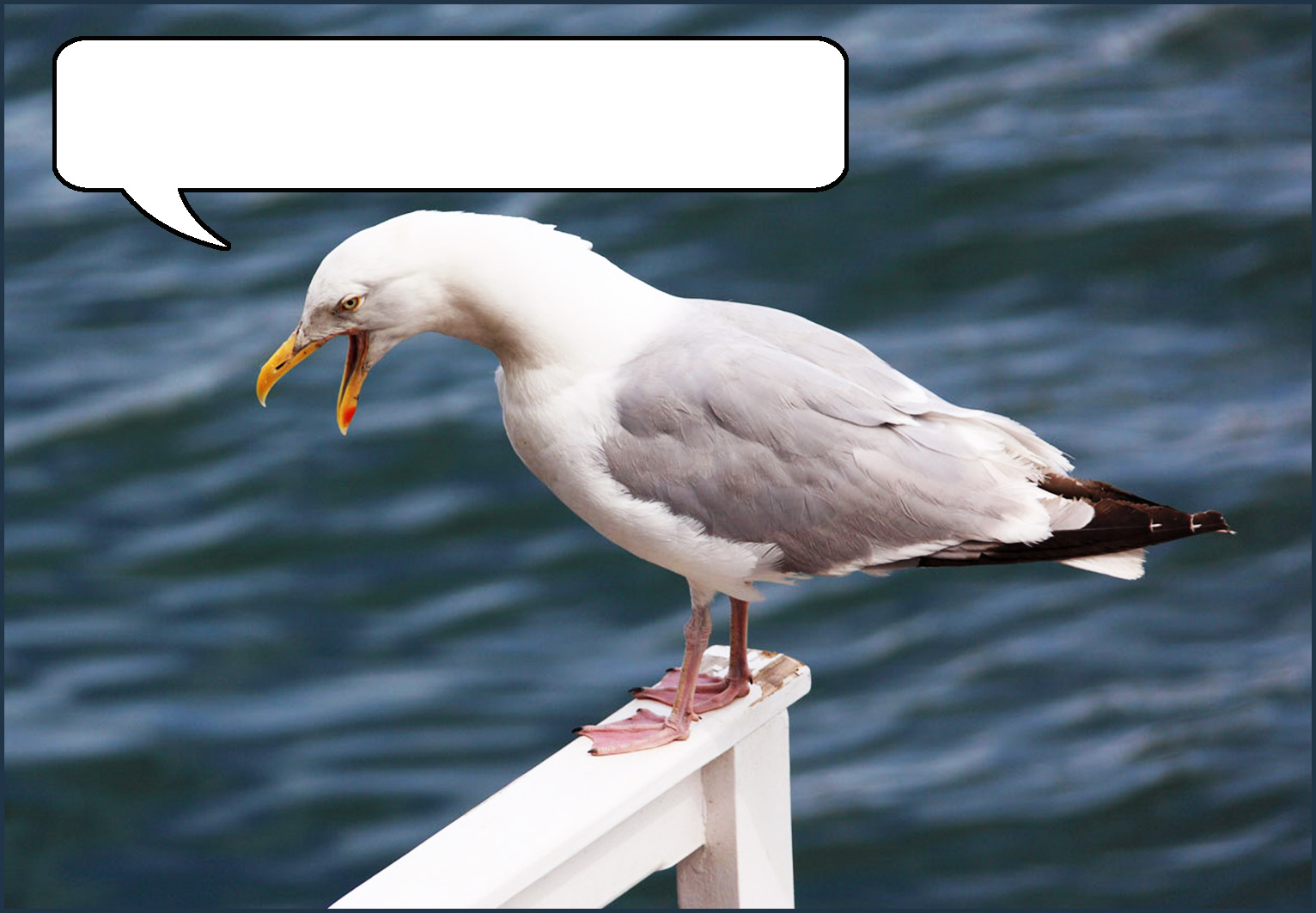 Postcard with sea gull