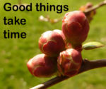 picture quote with flower buds