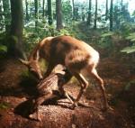 Mother deer and kid